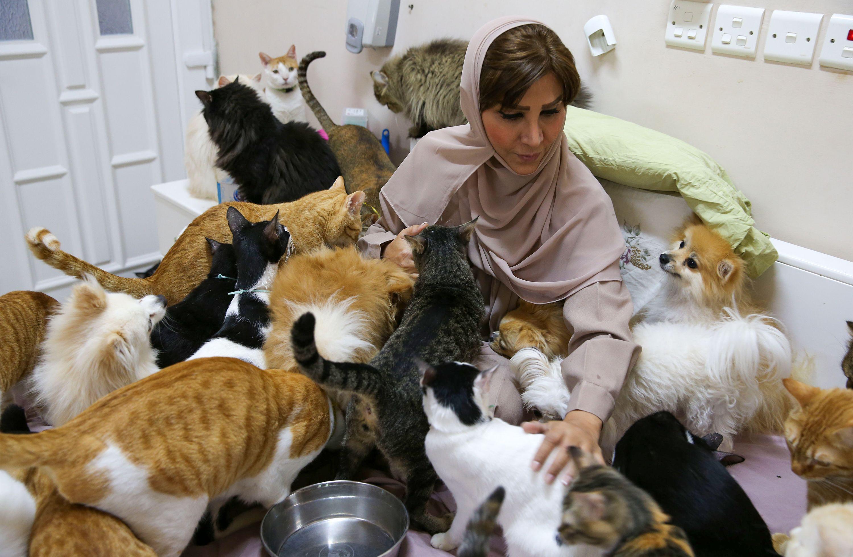 Ummanlı kadın 480 kedi ve 12 köpekle yaşıyor